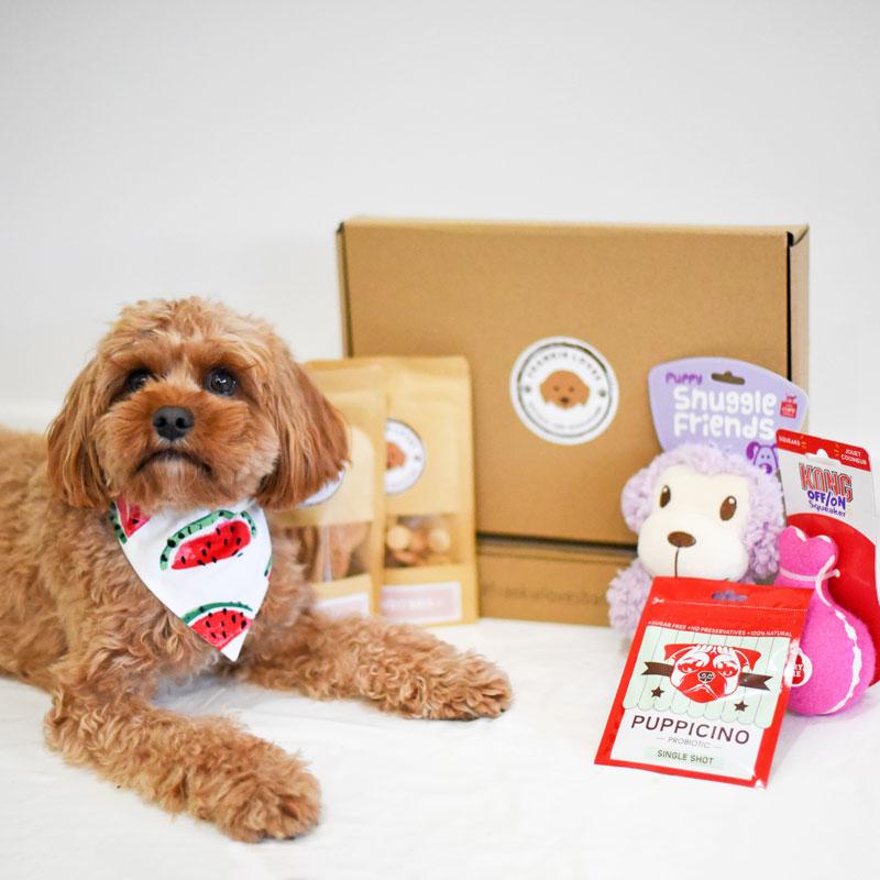 Dog gift box - Frankie Loves