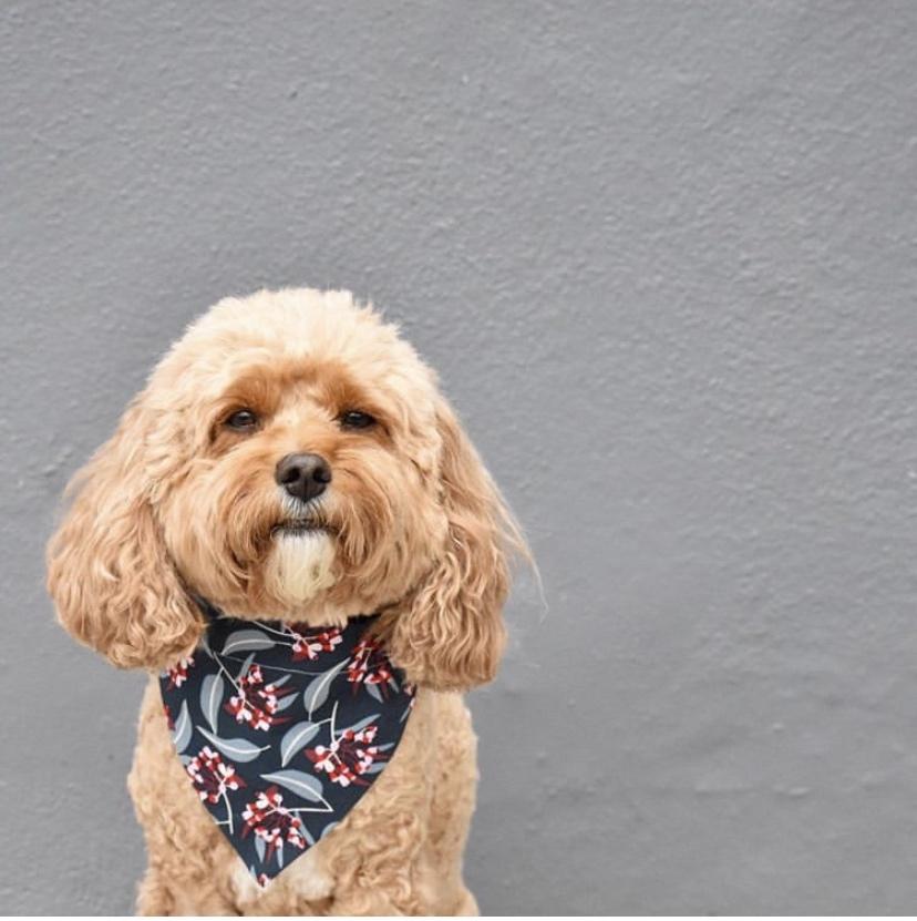 dog wearing gumnut bandana
